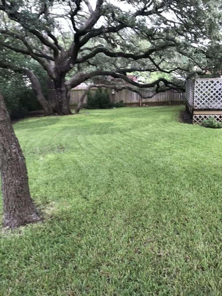 lawn maintenance in summer