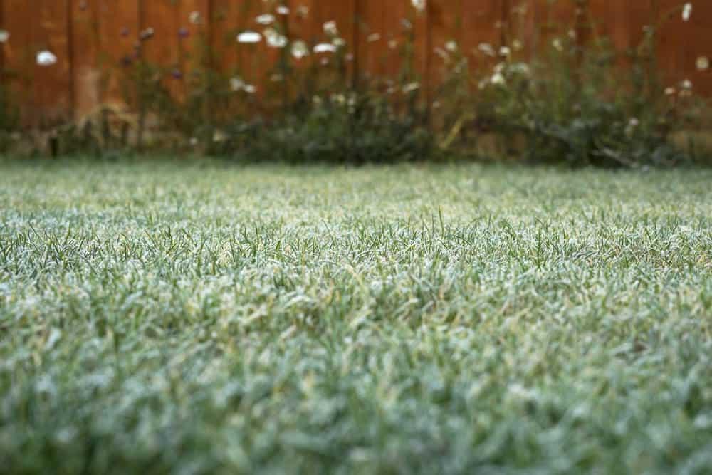 lawn maintenance in winter